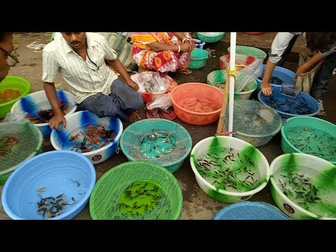 SHYAMBAZAR AQUARIUM  FISH & BIRDS MARKET(KOLKATA) / কলকাতার  রঙিন মাছ এবং পাখিপায়রার  বাজার
