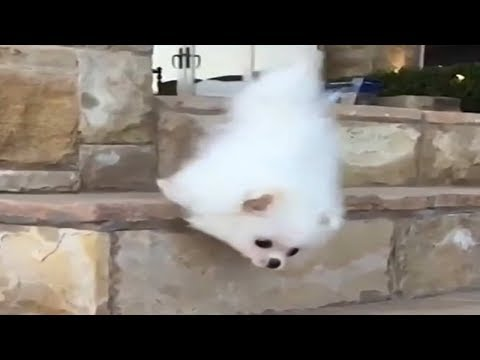 ⯈CUTE & FUNNY: PUPPIES Falling Down Stairs COMPILATION HD