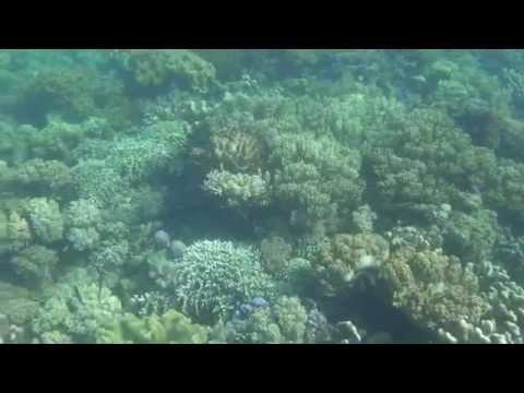 Explore Timor-Flores : Pulau Kalong, Taman Nasional 17 Riung