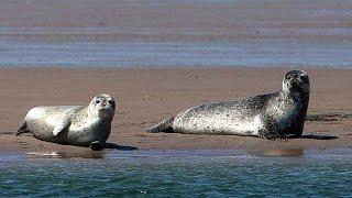 Grandeur Nature - La baie de somme - Documentaire Animalier
