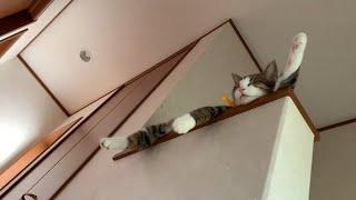 ダラけ過ぎてる猫がかわいい