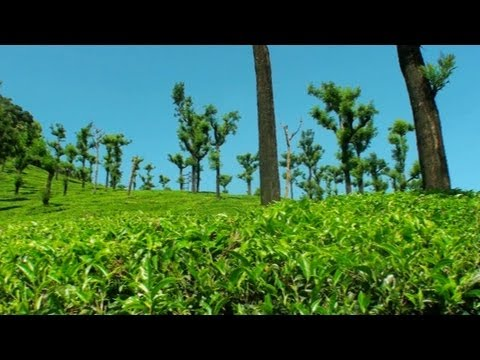 Tea Estates in Valparai Hill Station in Tamilnadu
