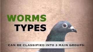 Chap. 7 - How to keep our pigeons free of parasites (Worms). Mercasystems.com