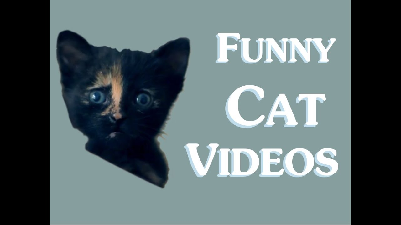 Funny Cat Videos (Clean) New 2014 - Funny clean cat video ... Funny Cat Videos Clean