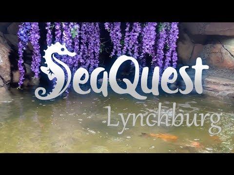 🐠SeaQuest Aquarium  Lynchburg  Virginia🐠