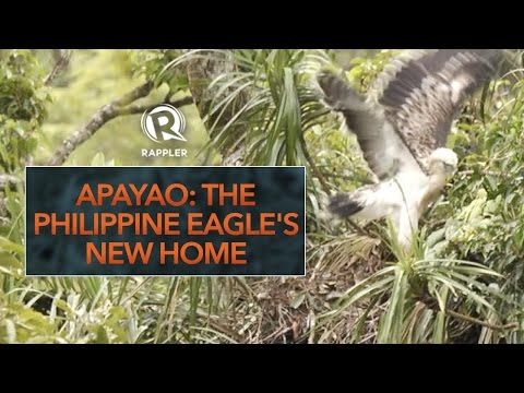 Apayao:  The Philippine Eagle's new home
