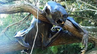 10 Creepiest Things Found Deep In The Woods