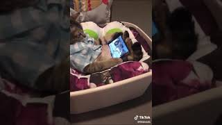 Funny Pet Cat Watching Movies