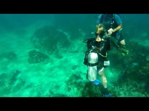 Copy of Dive Right In Hull Cleaning LLC Videos
