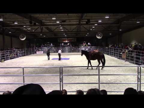 Pat Parelli Demo at Horse World Expo 2015 Sunday pt. 1