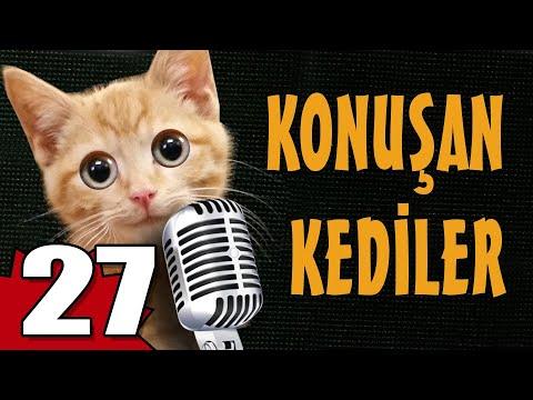 Konuşan Kediler 27