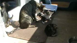 Oriental Cat Litter W (www.baltior.eu) 20090714-1