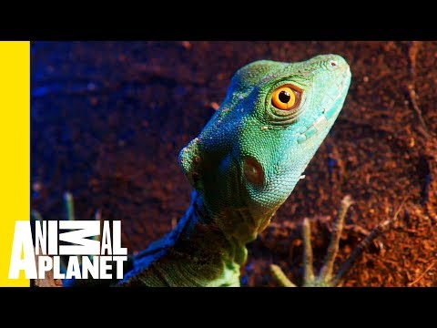 What Exactly Is a Reptile?