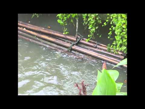 Feeding fish at Vimanmek Mansion, Bangkok