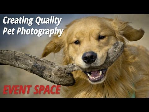 Creating Quality Pet Photography