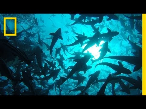 Onward: Visit the World's Largest Open-Ocean Fish Farm | National Geographic