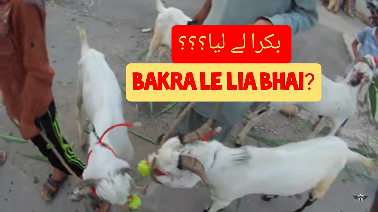 Have you bought Bakra?