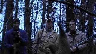 Охота с норными, двухдневное спасение собаки и двойной бонус в конце.