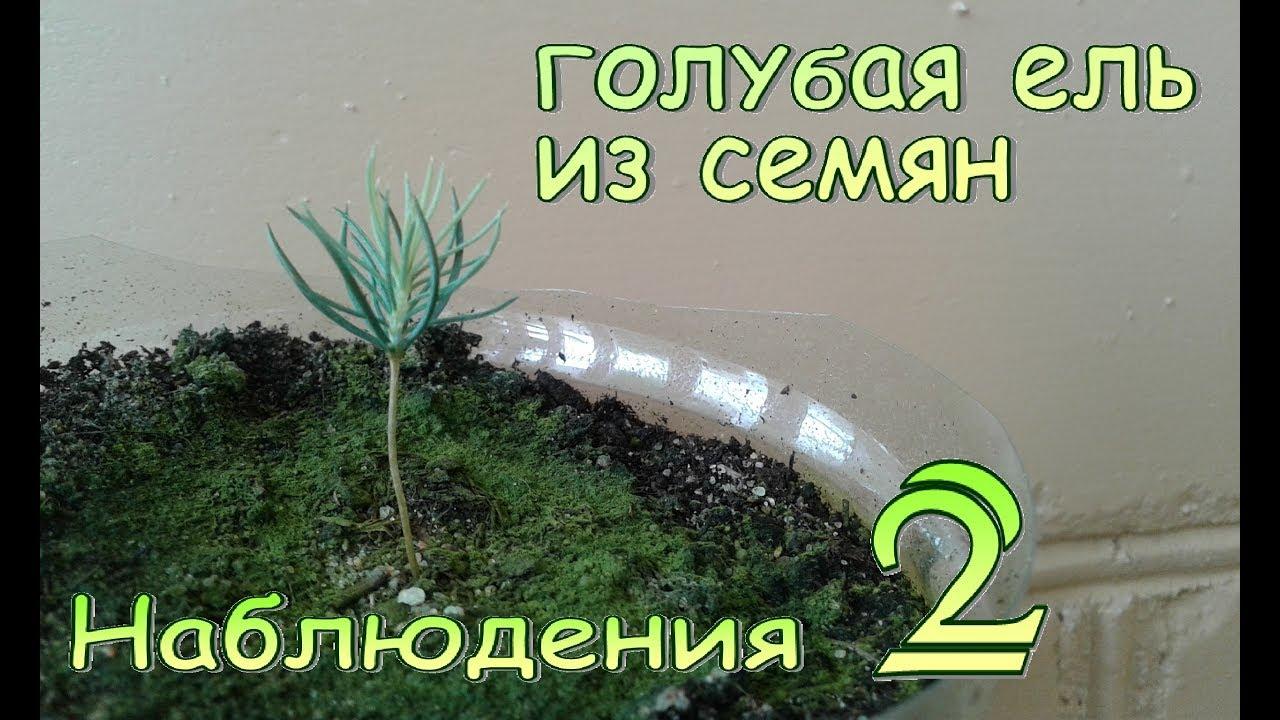 Современный дизайн хрущевки (72 фото)