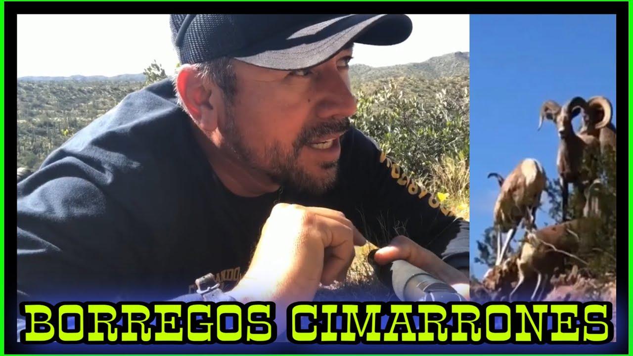 AVENTURA NÚMERO 134 BORREGOS CIMARRONES
