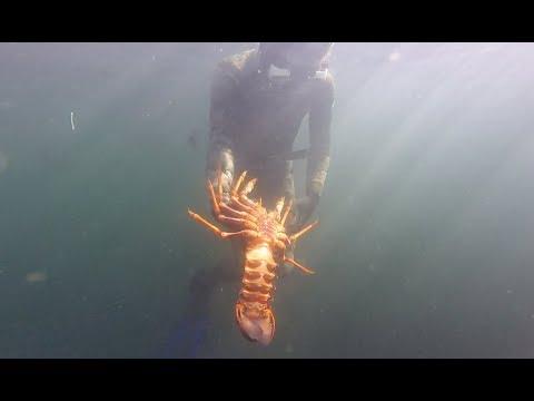 Crayfish in the Derwent River!