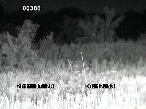UFO Sighting Case? Nietoperze [bat] w nocnych ujęciach & dodatek nieziemski