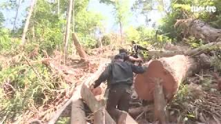 Bắt quả tang trưởng thôn và đồng bọn tham gia phá rừng