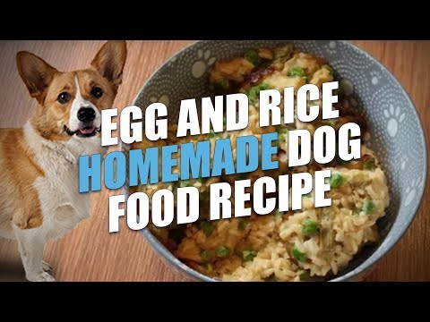 egg-and-rice-homemade-dog-food-recipe-cheap-and-healthy