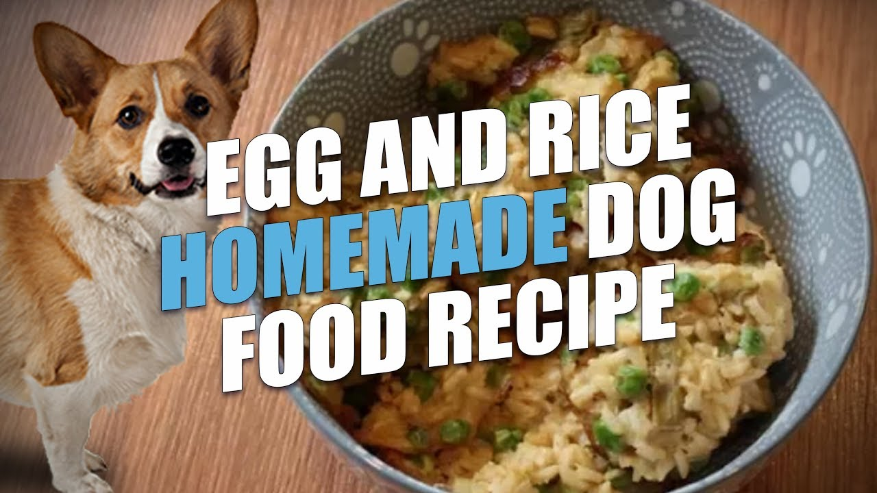 Egg and rice homemade dog food recipe cheap and healthy youtube egg and rice homemade dog food recipe cheap and healthy forumfinder Choice Image