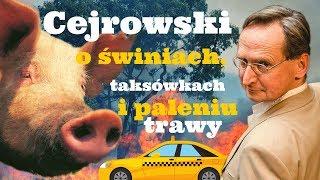 Cejrowski o świniach, taksówkach i paleniu trawy 2019/04/16 Radiowy Przegląd Prasy Odc. 994
