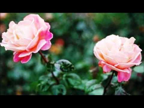 nechivile---homenagem-ao-meu-amor