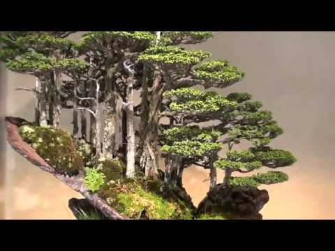 Bonsai - Amazing world of Masahiko Kimura at Omiya Bonsai Museum
