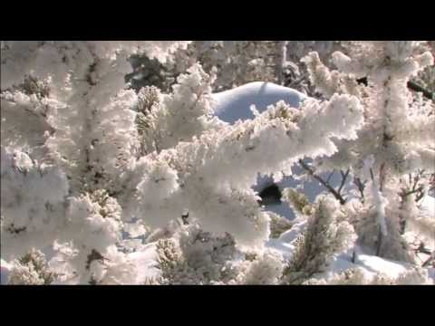Yellowstone National Park ~ Winter Wonderland