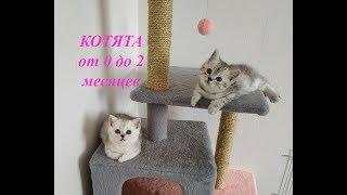 СМЕШНЫЕ КОТЯТА ОТ 0 ДО 2 МЕСЯЦЕВ СКОТТИШ СТРАЙТ Мяуканье Милые котята играют Cats Kittens 0-2 month