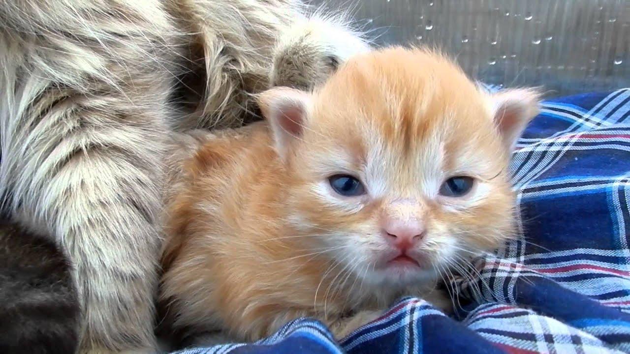 Аэлита и Малыши Aelita Кошка с котятами A cat with kittens ...