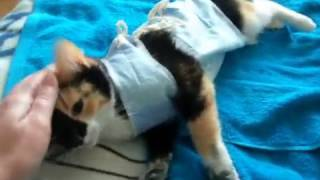 кошка после наркоза