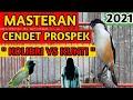 Masteran Cendet Prospek  Kolibri Vs Kunti   Mp3 - Mp4 Download