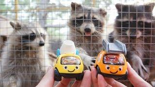 Видео для детей. Машинки Томми и Мэгги в зоопарке.(Томми приготовил для Мегги сюрприз! Они отправляются в небольшое путешествие - зоопарк, находящийся в горах..., 2016-01-29T10:11:19.000Z)