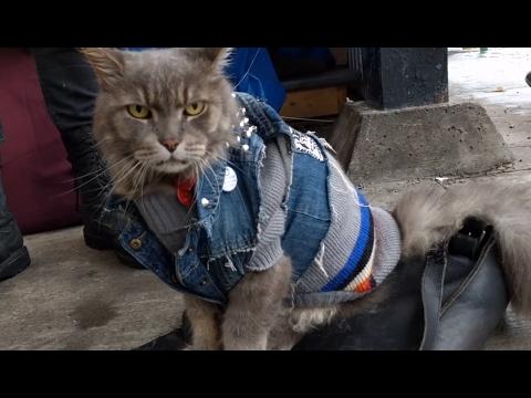 'Punk Cat' at Jean-Talon Market | Montreal, Canada
