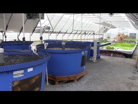 What is bioponics how it compares to hydroponics and a for Hydroponic bed liner