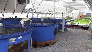 Bluegrass Aquaponics - Midway, KY