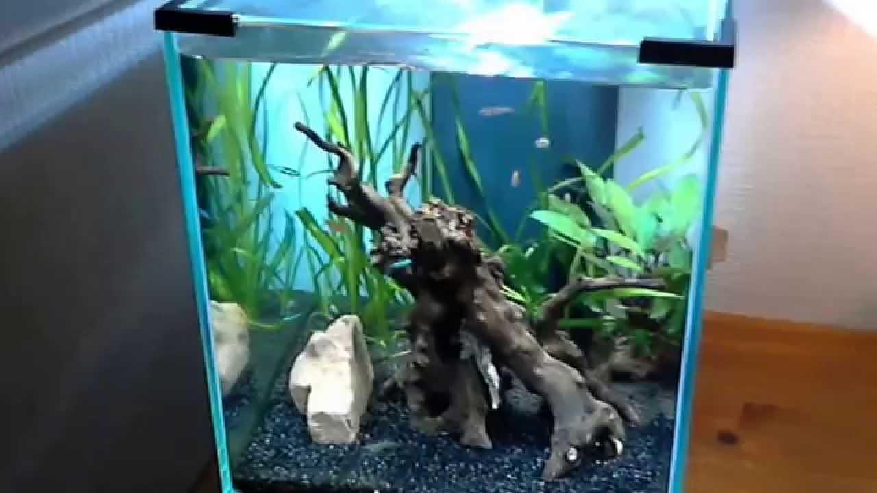 aquarium 40 litres 1ere cat gorie youtube. Black Bedroom Furniture Sets. Home Design Ideas