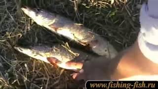 Видео о рыбалке на Каме и ее притоках..Весна.Май месяц.