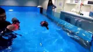 My Baby Poodle And Schnauzer Swimming At Dogdogcome Wonderland
