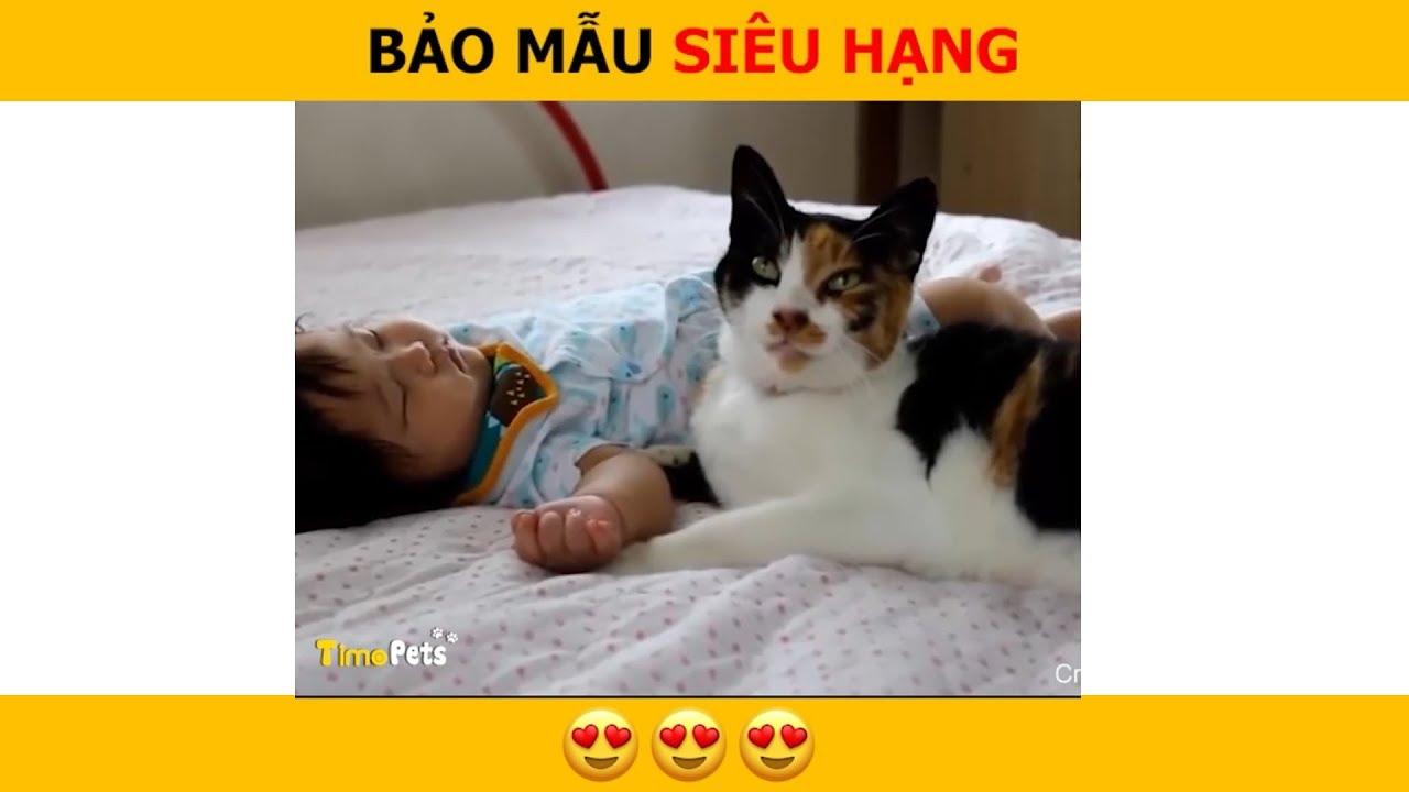 Timo Pets ? Việc gì cũng Phải đến tay Trẫm ? Video Hài Hước Chó Mèo