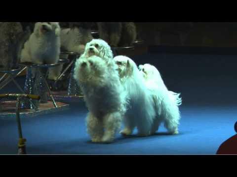 Olate Dogs - NBA Halftime Show!