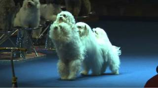 Olate Dogs  NBA Halftime Show!