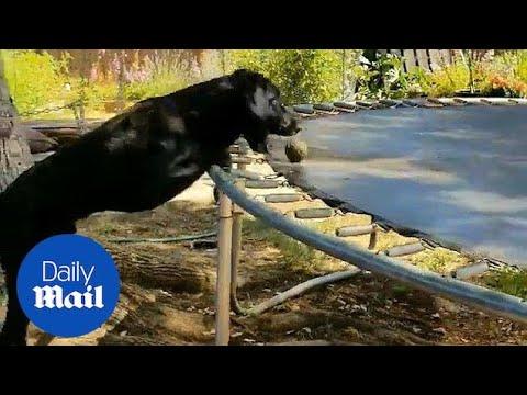 Preston Scott - WATCH! Adorable Dog Plays Fetch On His Own
