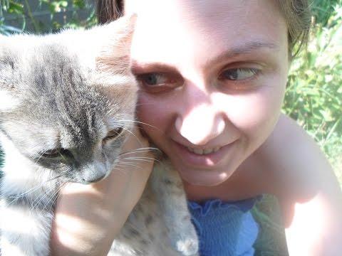 Ветеринарные советы, домашняя аптечка для кошек, как
