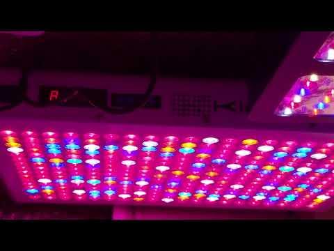 Complete Walkthrough Of LED Grow Room Equipment